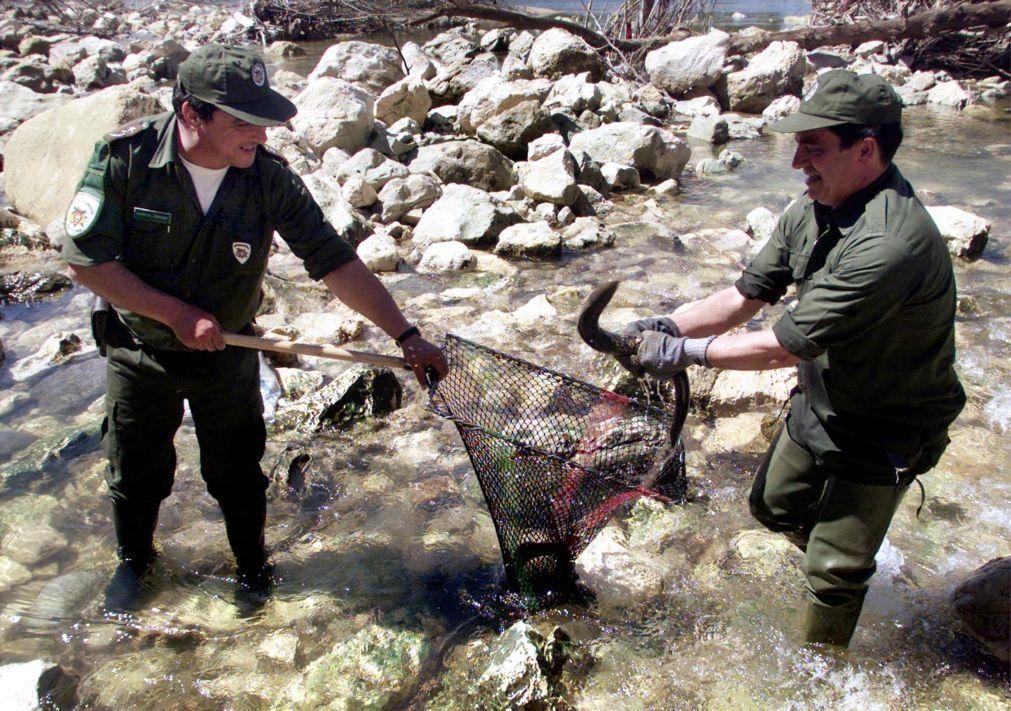 Alterações climáticas, barreiras artificiais e qualidade da água ameaçam lampreia
