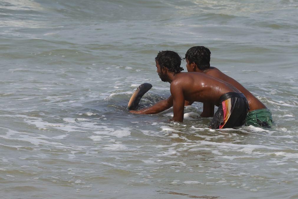 Sri Lanka resgata 120 baleias que encalharam na costa