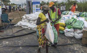 PNUD e parceiros distribuem sementes e ferramentas a 500 famílias afetadas por ciclones em Moçambique