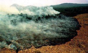 Desflorestação da Amazónia cresceu mais de 50% em outubro no Brasil