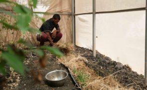 Jovens produzem pasto hidropónico para driblar secas em Cabo Verde