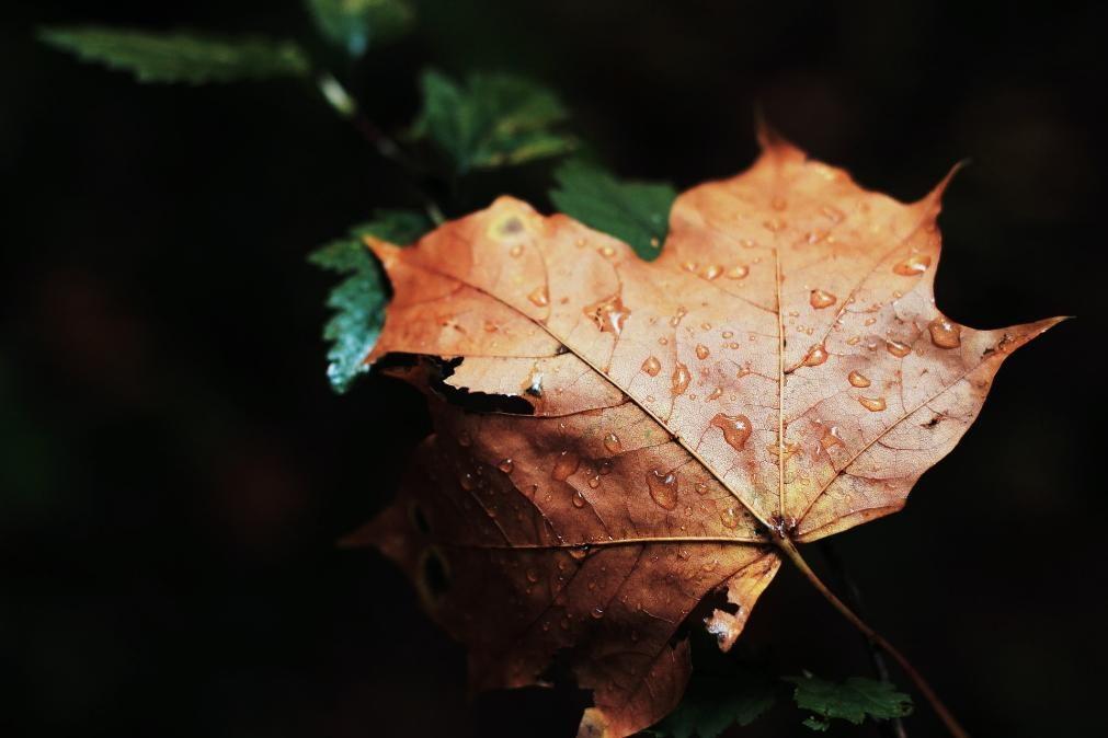 Meteorologia: Previsão do tempo para sexta-feira, 13 de novembro