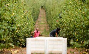 Valor da produção agrícola em Portugal sobe 3,2% em 2019, acima da média da UE