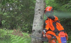 Madeireiro morre atingido por árvore de grande porte em Barcelos
