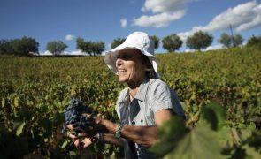 Portugal em 4.º lugar na produção de vinho da UE com 700 milhões de litros