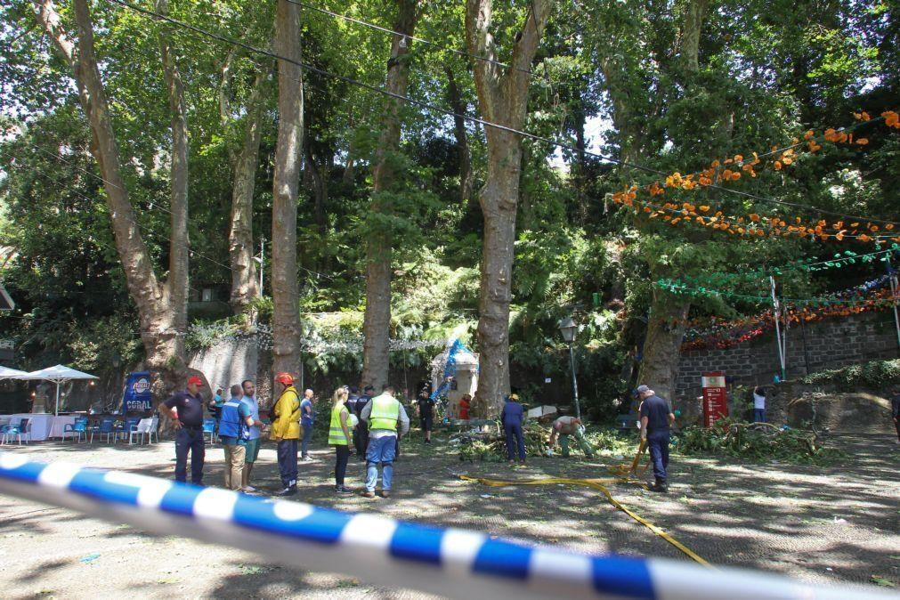 Arguidos no processo da queda da árvore na Madeira vão a julgamento