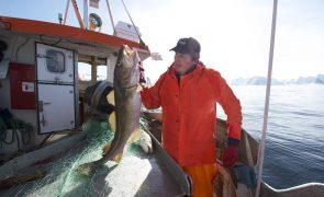 Bacalhau da Noruega Bacalhau, o protagonista da noite de Natal... E não só.