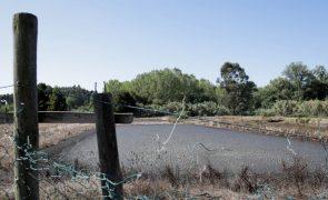 GNR de Leiria deteta descarga ilegal de efluentes suinícolas