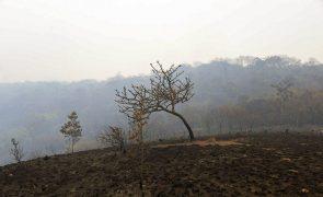 Desflorestação na Amazónia brasileira cresce 9,5% no último ano