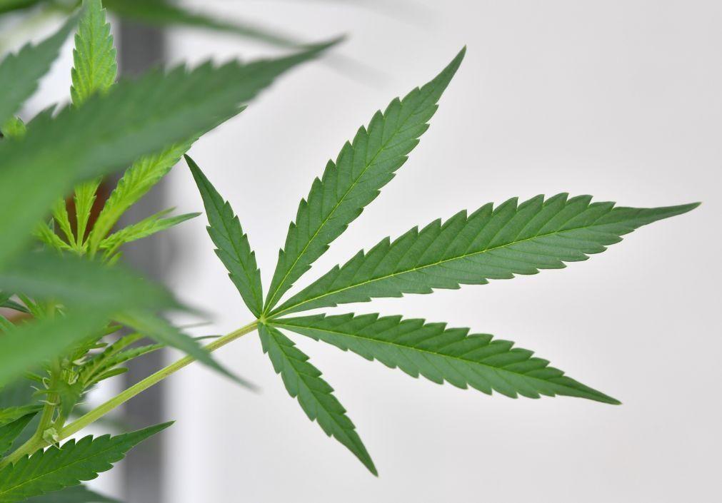 PJ apreendeu cannabis escondido em banheiras em Lisboa