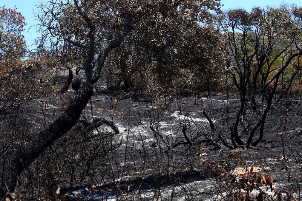 Metade de ilha australiana classificada pela Unesco destruída por incêndio