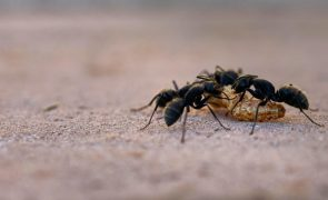 Guia completo para livrar-se das formigas sem matá-las