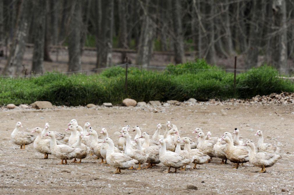 França deteta primeiro surto de gripe aviária numa fazenda