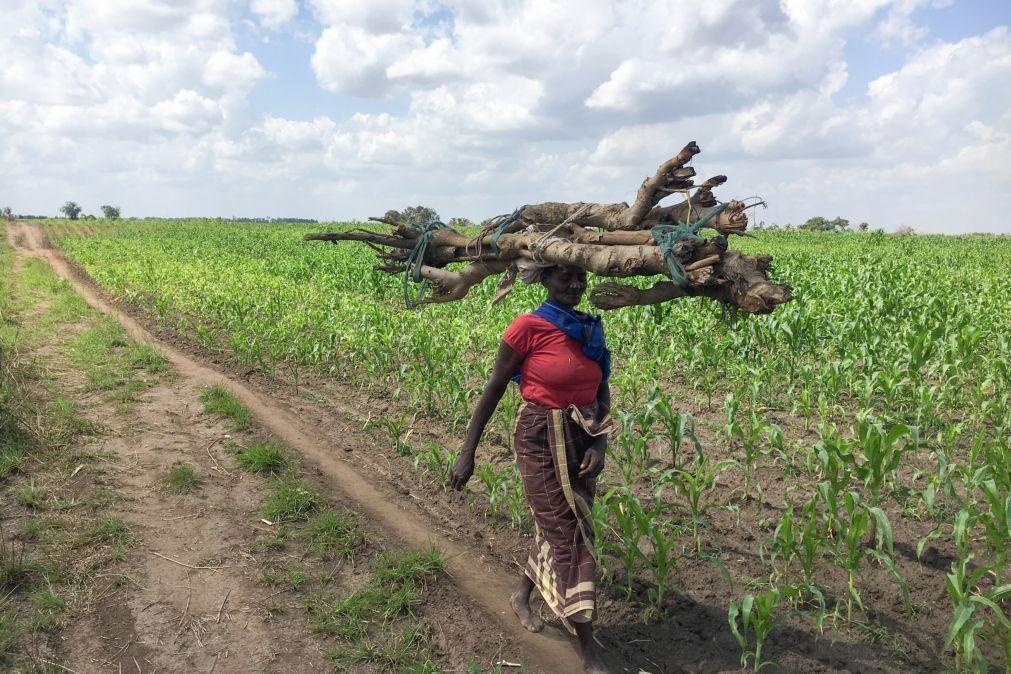 Fitch decide manter 'rating' de Moçambique em CCC