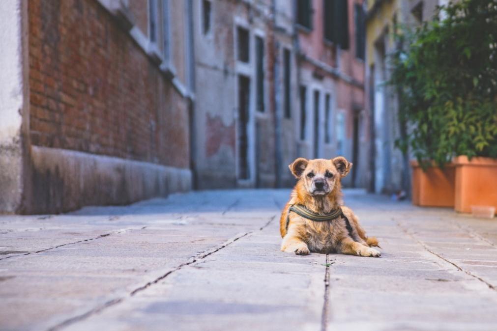 Crime de abandono de animais dispara na pandemia
