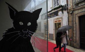 Ilustrações em montras de lojas fechadas dinamizam centro histórico de Torres Vedras