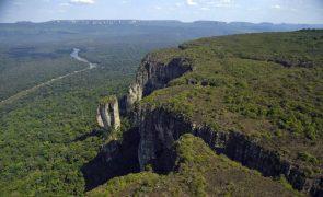 Destruição da Amazónia cresceu 23% em novembro no Brasil