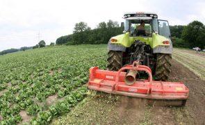 Empresas agrícolas mais do que duplicaram em dez anos para 14.500 - INE