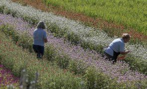 Bruxelas recomenda que agricultura em Portugal dê prioridade ao ambiente