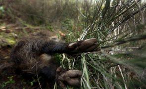 Instituto da Conservação da Natureza abre processo para averiguar abate de animais em montaria