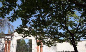 Herdade da Torre Bela descarta qualquer responsabilidade no abate dos 540 animais