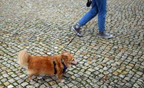 Carta aberta a Marcelo e Costa contesta mudança da tutela de animais de companhia