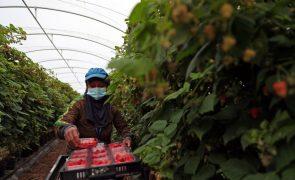 A pandemia abriu os horizontes nacionais à The Summer Berry