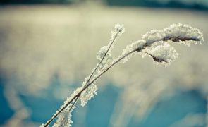 Muito frio e geada no primeiro fim de semana do ano