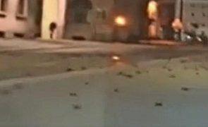 Centenas de pássaros mortos após fogo-de-artifício em Roma [vídeo]
