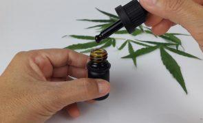 Benefícios e usos do óleo de canábis