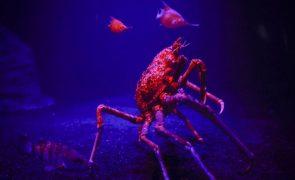 Apreendidos mais de 1.500 quilos de caranguejo no centro de Moçambique