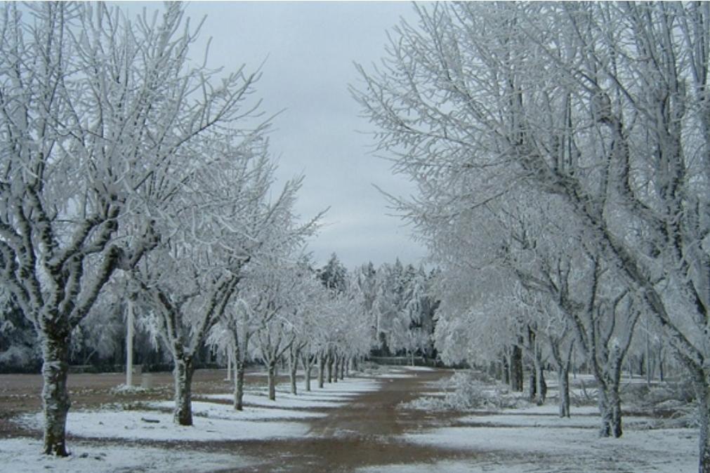 Meteorologia: Previsão do tempo para domingo, 10 de janeiro