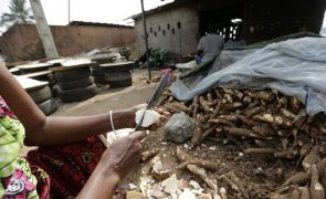 Angola é terceiro maior produtor africano de mandioca e aposta na transformação em amido