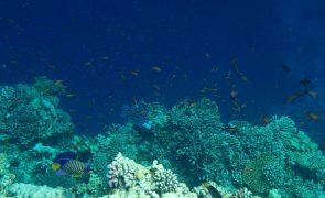 Redução de oxigénio nos oceanos é o maior impacto negativo para organismos