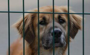 Adoções de animais duplicaram em 2020 no Centro de Recolha de Loures - Câmara