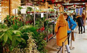 Capacidade das plantas para absorver dióxido de carbono pode vir a baixar para metade - estudo