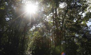 Cerca de 43 milhões de hectares de florestas importantes perdidos em 13 anos -- WWF