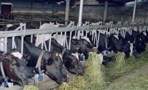 Agroindustrial do Centro atribui prémios de 355 mil euros a produtores de leite