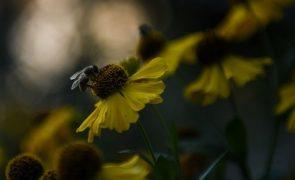 Brasil anuncia descoberta de uma nova espécie de abelha polinizadora