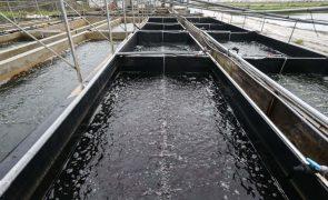 Covid-19: Vendas de algas e bivalves com quebras até 90% desde março -- associação