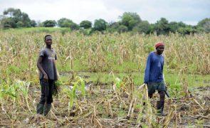 Mineira Vale condenada a indemnizar camponeses no centro de Moçambique
