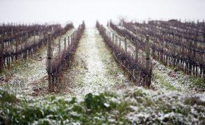 Covid-19: Comissão Europeia prolonga ajudas ao setor vitivinícola até outubro