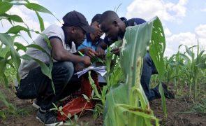 Covid-19: Trabalhadores agrícolas moçambicanos impedidos de voltar à África do Sul