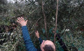 Politécnico de Leiria em projeto transnacional para estudar património olivícola