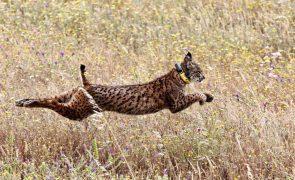 Conservação de habitats e espécies protegidas degradou-se, diz associação Zero