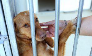 Covid-19: Associação inicia recolha de alimentos para mais de 60 mil animais em risco