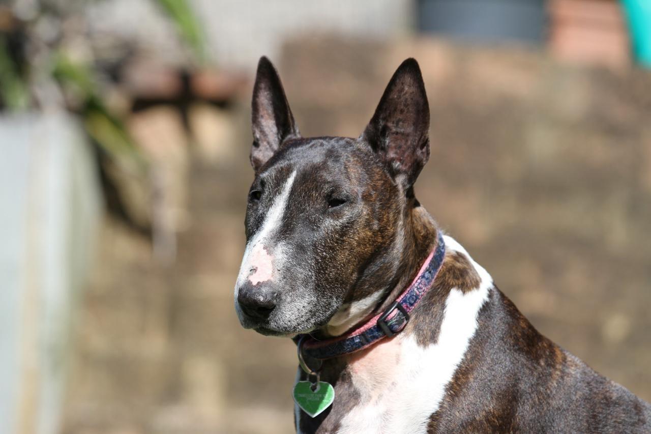 Cão encontrado morto junto a rio com tijolos presos na coleira