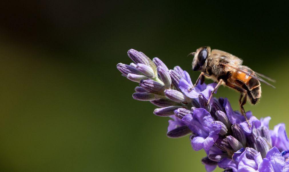 Época das alergias cada vez mais prolongada e intensa devido às alterações climáticas