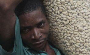 Multinacional Olam anuncia fecho de fábricas de castanha de caju em Moçambique
