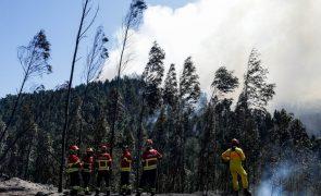 Incêndios de 2017 originaram maior densidade de eucaliptos alguma vez registada